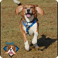 Adopt A Pet :: Willie - Yardley, PA