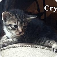 Adopt A Pet :: Cry - Bentonville, AR