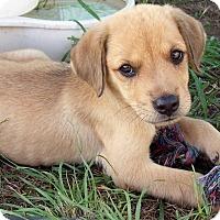 Adopt A Pet :: Odie - Waller, TX