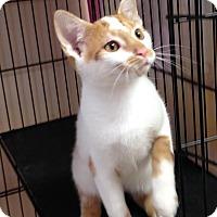 Adopt A Pet :: Matty - East Brunswick, NJ
