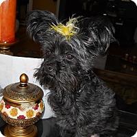Adopt A Pet :: Izzie - Charlotte, NC