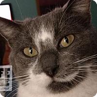 Adopt A Pet :: Cindy - Dalzell, IL
