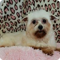 Adopt A Pet :: Darley Miller - Urbana, OH