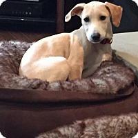 Adopt A Pet :: Buttercup 3190 - Toronto, ON