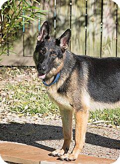 German Shepherd Dog Dog for adoption in Houston, Texas - Roland