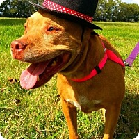 Adopt A Pet :: Bella - Simsbury, CT