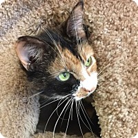 Adopt A Pet :: Baby Girl - Pleasant Hill, CA