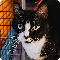 Adopt A Pet :: Mumbles - Indianapolis, IN