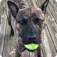 Adopt A Pet :: Abel the loverboy - Troy, MI