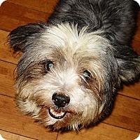 Adopt A Pet :: SNOOKER - Hollywood, FL