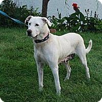 Adopt A Pet :: Nala - COURTESY POSTING - Milford, CT