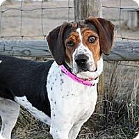 Adopt A Pet :: Wilma - Cheyenne, WY