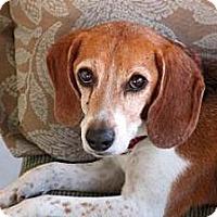 Adopt A Pet :: Luigi Joe - Phoenix, AZ