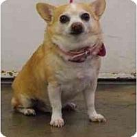 Adopt A Pet :: Barley - YERINGTON, NV