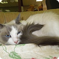 Adopt A Pet :: Tom - Medina, OH