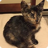 Adopt A Pet :: Binky -Adoption Pending! - Arlington, VA