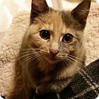 Adopt A Pet :: SPECKLES - Ridgewood, NY