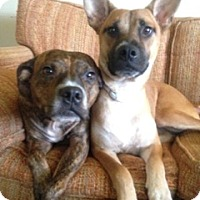 Adopt A Pet :: MADISON - Moosup, CT