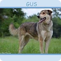 Adopt A Pet :: GUS - Dallas, NC
