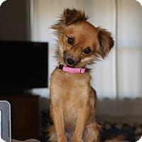Adopt A Pet :: Lacey - Edmonton, AB