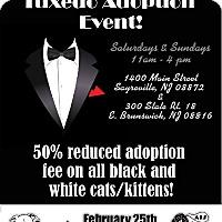 Adopt A Pet :: Tuxedo adoption event! - East Brunswick, NJ