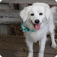 Adopt A Pet :: Steven Tyler - Los Angeles, CA