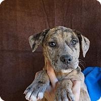 Adopt A Pet :: Mia - Oviedo, FL