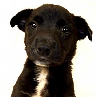 Adopt A Pet :: Patrick - Oxford, MS