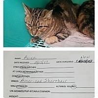 Adopt A Pet :: Anna - California City, CA