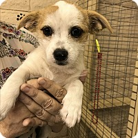 Adopt A Pet :: Iris - Redding, CA