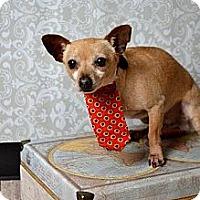Adopt A Pet :: Spud *Diamond Dog adoption fee $75* - McKinney, TX