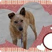 Adopt A Pet :: Ginger 3 - Staunton, VA