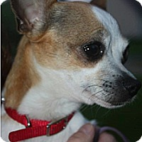 Adopt A Pet :: Barbie - Hastings, NY