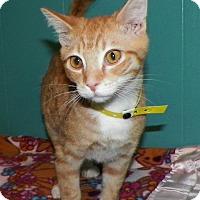 Adopt A Pet :: Yogi - Dover, OH