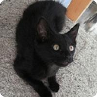 Adopt A Pet :: Katerina - Vancouver, BC