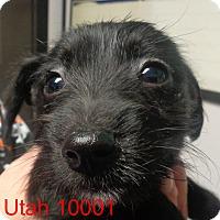 Adopt A Pet :: Utah - baltimore, MD