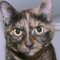 Adopt A Pet :: Missy - New York, NY