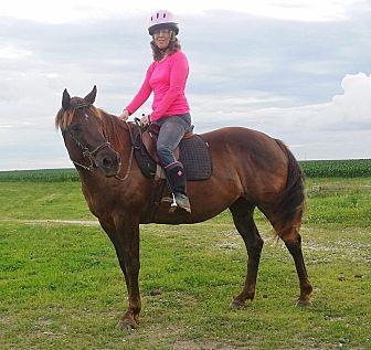 Quarterhorse Mix for adoption in Sidell, Illinois - Brownie