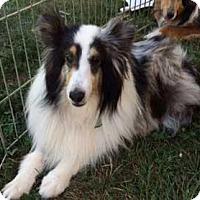 Adopt A Pet :: Princess - Abingdon, MD