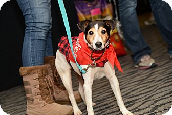 Jack Russell Terrier Mix Dog for adoption in Pittsburgh, Pennsylvania - Dalton