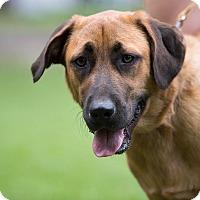 Adopt A Pet :: Bandit - Daleville, AL