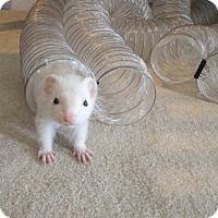 Adopt A Pet :: Bell - Acworth, GA