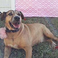 Adopt A Pet :: Deena - Palmetto Bay, FL
