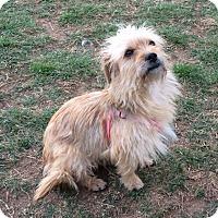 Adopt A Pet :: Olive Oil - San Antonio, TX