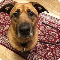 Adopt A Pet :: Zoey - Valparaiso, IN