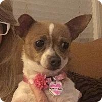 Adopt A Pet :: Asia - San Marcos, CA
