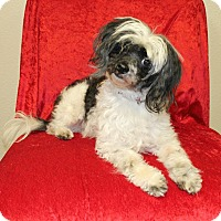 Adopt A Pet :: Sparky - New Milford, CT