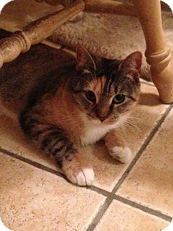 Calico Cat for adoption in Hamilton, New Jersey - SABRINA - 2013