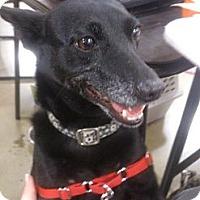 Adopt A Pet :: Betty - Georgetown, KY