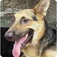 Adopt A Pet :: Toby - Pike Road, AL